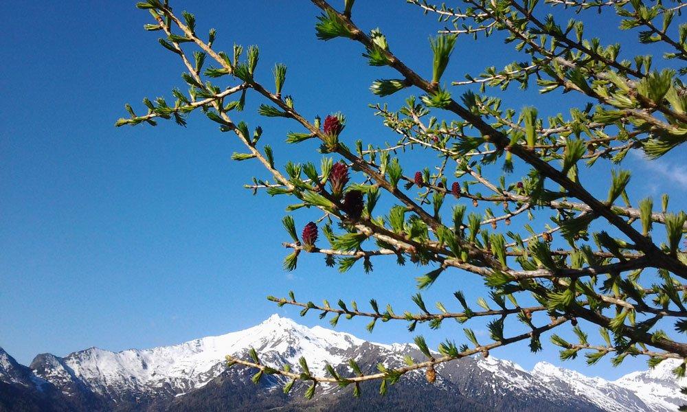 Romantikurlaub in Südtirol: Erleben Sie stimmungsvolle Stunden zu zweit