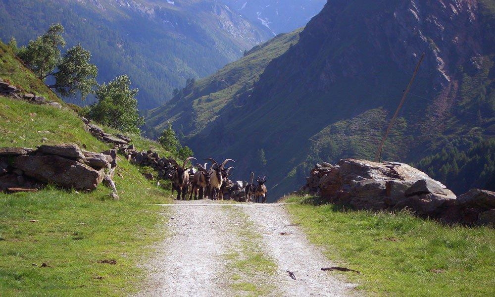 Urlaub in den Bergen: Verbringen Sie den Sommer in Südtirol