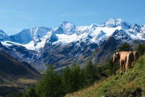 Vacanza in Val Passiria: qui trascorrerete ore indimenticabili 5